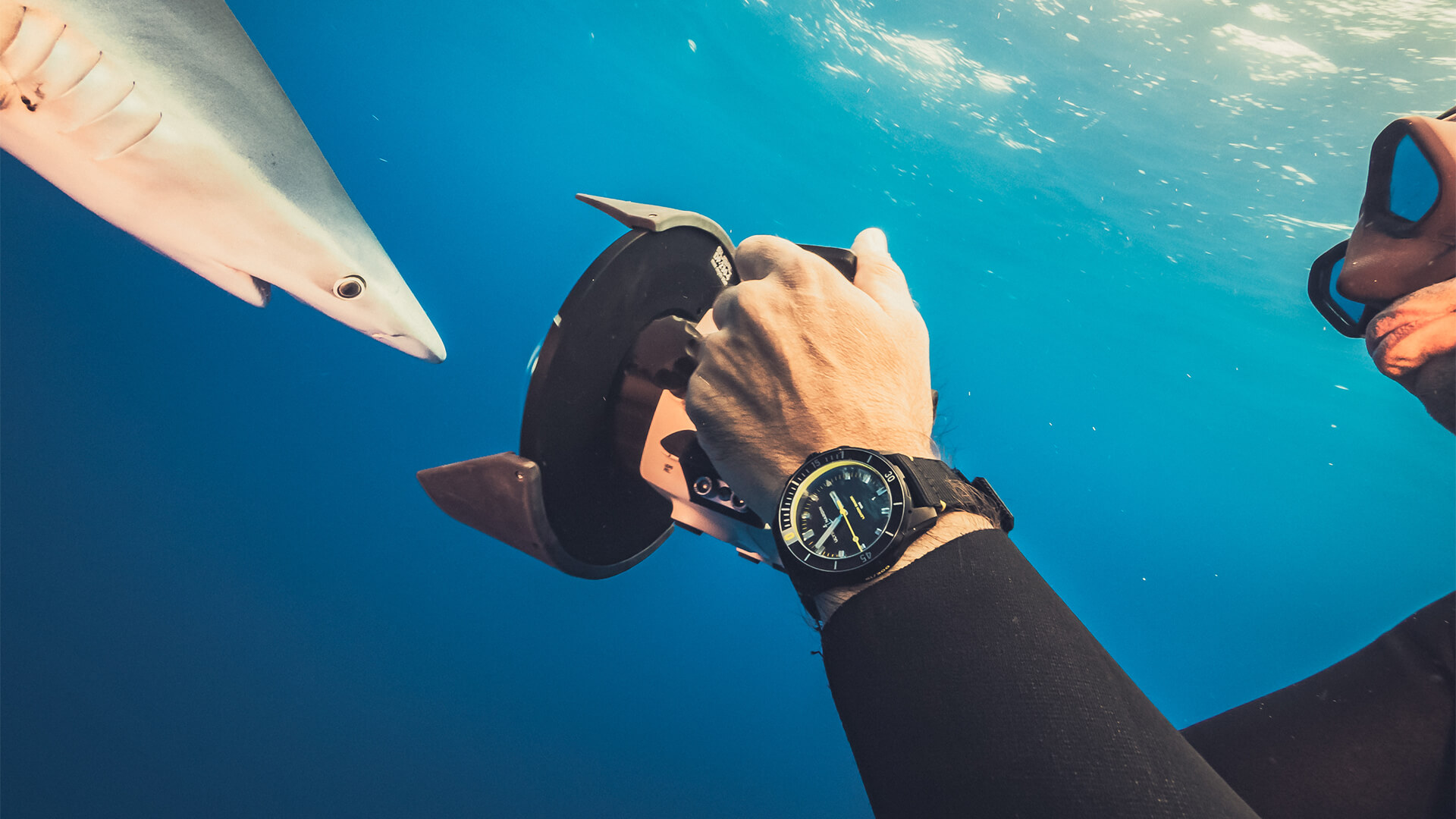 Diver 42mm - Lemon Shark
